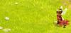 healeuse-rasta