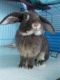 Photo de rabbit-animals