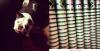 joe.tweet+maya.phot+CLIPJONAS+kev.phot+vid.JB