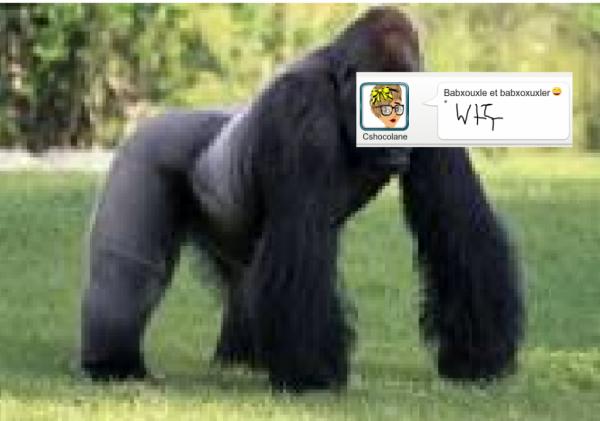 Petite gorille version msp*Q*