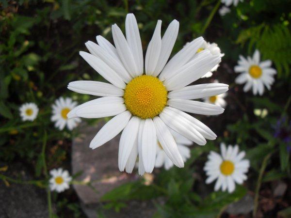 Avec joie nous retournons à la FETE DES PLANTES  au HAUT DU TOT au-dessus de Vagney ce dimanche 09 AOUT , nous dentellerons au milieu de nombreux artisans et de vendeurs de plantes, profitez de ce moment sympa , le soleil sera au rendez-vous , venez nous rendre visite !