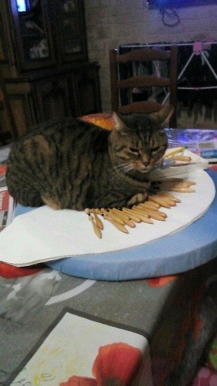 J'y vais...? J'y vais pas...? Qui peut m'expliquer ce qui attire les chats sur nos  galettes ? Nous avons tous vécu ce genre de situation , c'est obligé !!!! Même les aiguilles levées ils se couchent dessus. Et en plus nous gardons un souvenir d'eux dans notre tissage car denteller les poils de chat, après leur petite pause intrigante, est inévitable ! Nous les adorons.