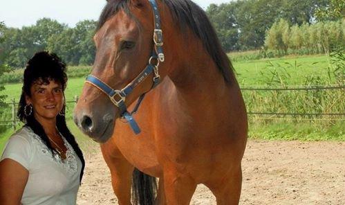 mon cheval  adorer  zouna