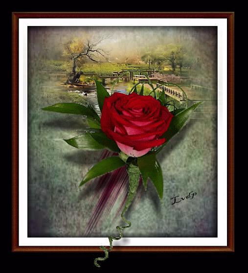 mercie  pour cete belle rose  recue du bloc  de  (lesvideodephil)
