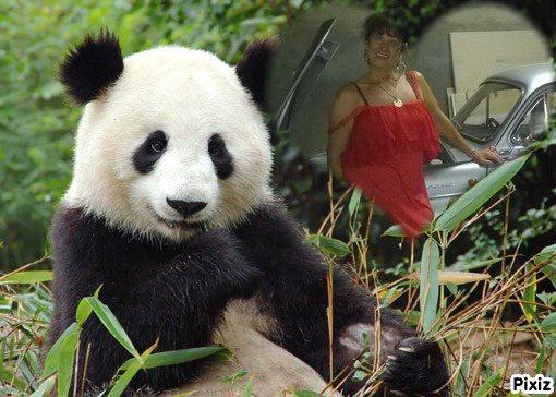 mercie   baucoups pource  baux  montage   du bb   panda  ( nature022)