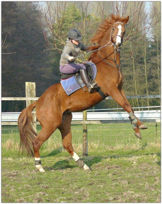 Beau Passant : Cheval de Haute Ecole