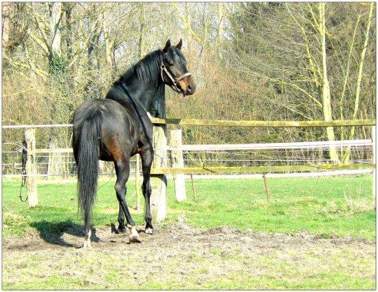 Juste un cheval...