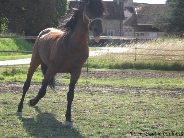 Des chevaux au pré, 7/08/2011 (partie 2)