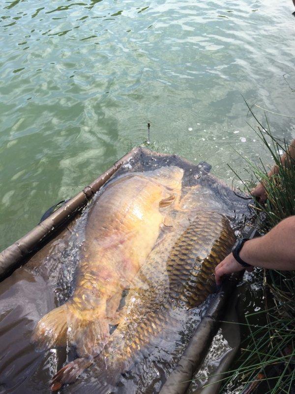 Quelques fish de mai/juin