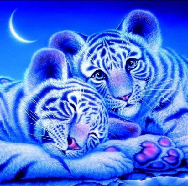 Trop choux les petit tiger trop mignonne