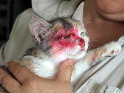 Un pauvre chaton torturé..