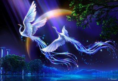 Les oiseaux magnifiques féeriques.