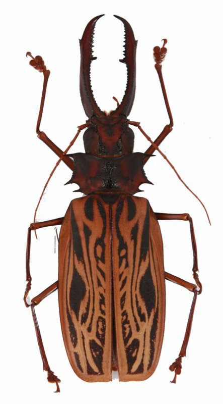 muséum des insectes