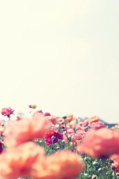 """""""A l'absurdité du monde, je voudrais répondre par sa beauté. A sa beauté correspond l'émerveillement permanent."""" - Florian Zeller"""