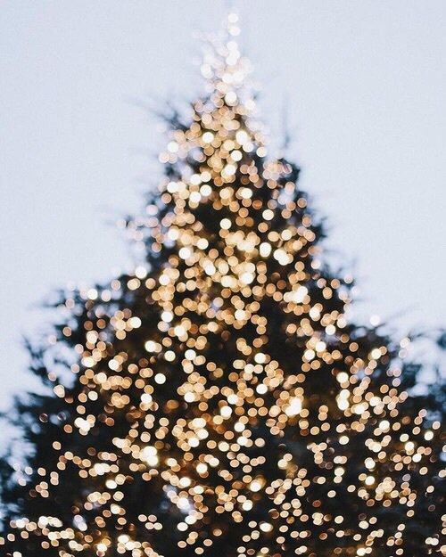 """""""Parce que Noël sans papa, ce n'est pas Noël. Personne ne peut remplacer un papa. Personne."""" - Katherine Pancol ; La valse lente des tortues"""