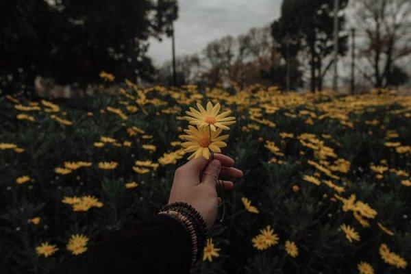 ''Très haut dans le ciel sont mes aspirations les plus élevées. Il se peut que je ne sois pas en mesure de les atteindre, mais je peux regarder en haut pour voir leur beauté, croire en elles et tenter de les suivre.'' - Louisa May Alcott