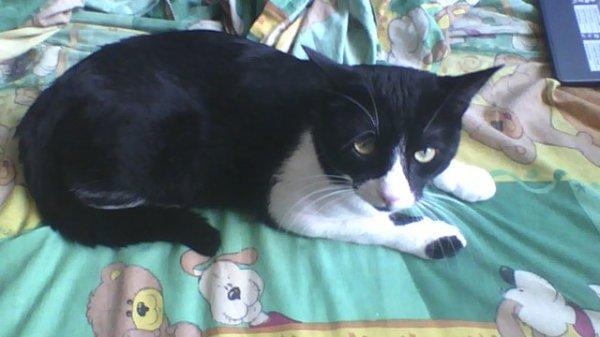 My Cat 1