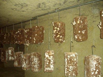 Musée du champignon a Saumur