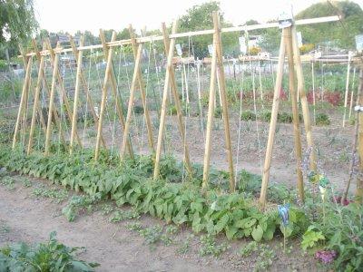 Silence les légumes ça pousse bio