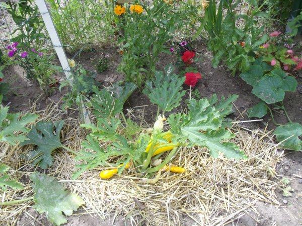 Ue vue générale du jardin juillet 2012