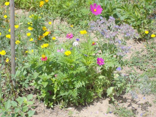 Un jardin c 39 est aussi un composte des fleurs un coin pour for Un jardin de fleurs