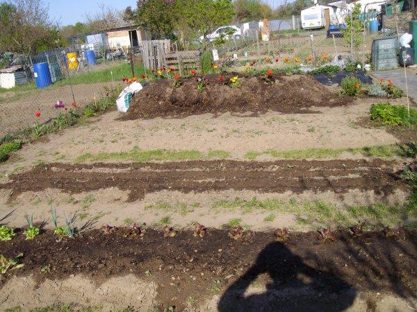 Redémarrage du jardin en 2013.