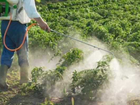 133.1 - Les Sénateurs recommandent aux collectivités de ne plus utiliser de pesticides Aujourd'hui à 00:39