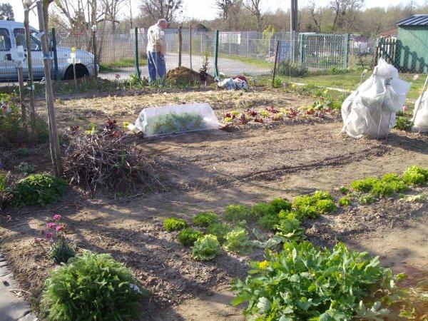 2014  les travaux reprenne au jardin......