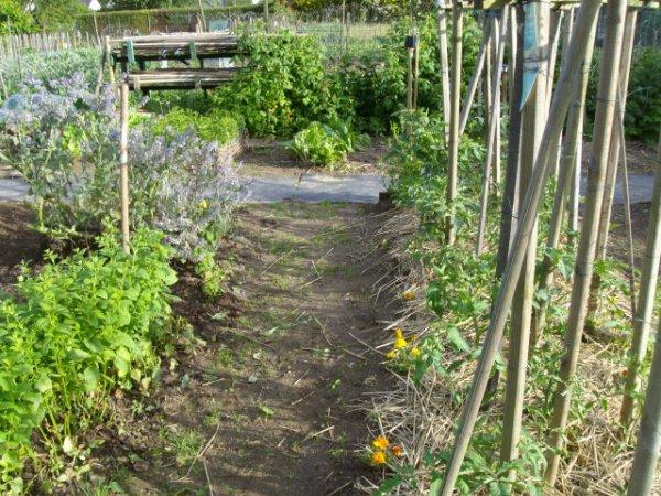 le lundi 2 juin 2014 état du jardin.n° 5..Jour de la notation de l'association des petits jardiniers de Saint Pierre des Corps