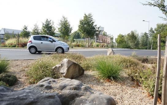 A Montataire, les plantes qui avalent la pollution font leurs preuves