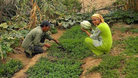 Transfiguré par la permaculture, un village passe de la misère à la richesse en 3 ans seulement !