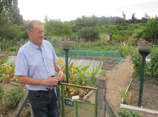 Indre-et-Loire - Tours - Agriculture Jardins familiaux : récolte mi-figue mi-raisin