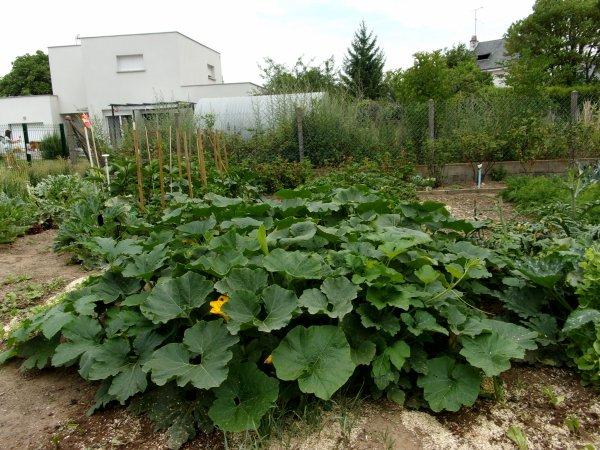 photos de mon nouveau jardin bel air n °1...