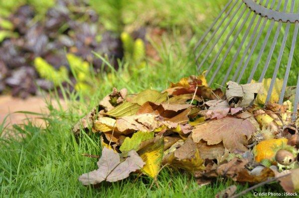 Terreau de feuilles : quelles feuilles utiliser ?