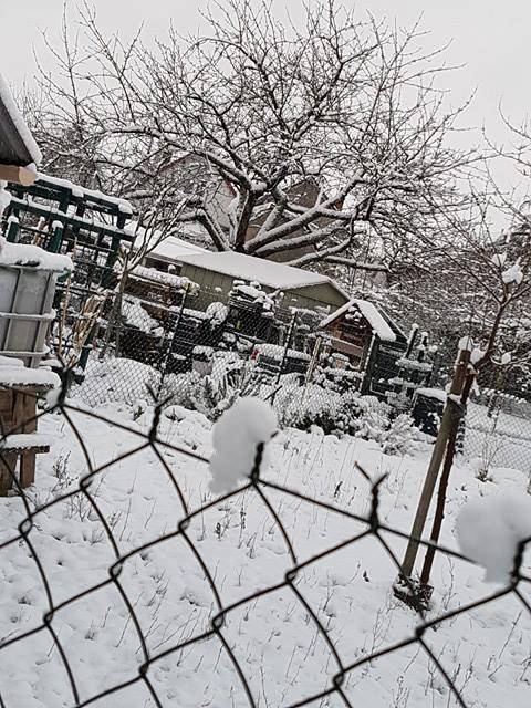 Le jardin  sous la  neige :  a Saint Pierre des Corps ,, bel air...