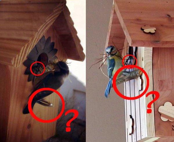 Un perchoir sur un nichoir ? Belle accroche pour les prédateurs !