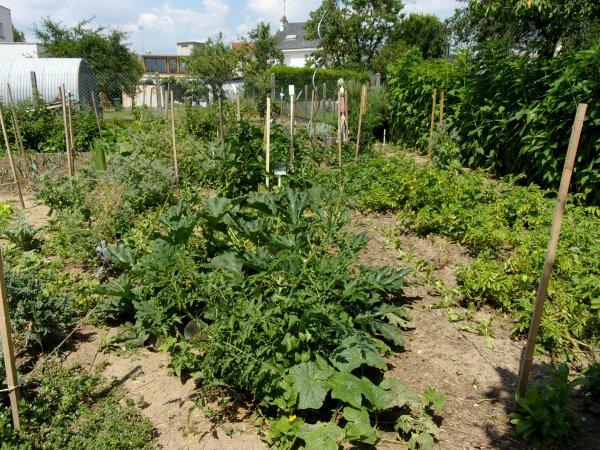 Le jardin début juillet 2018 légumes divers...