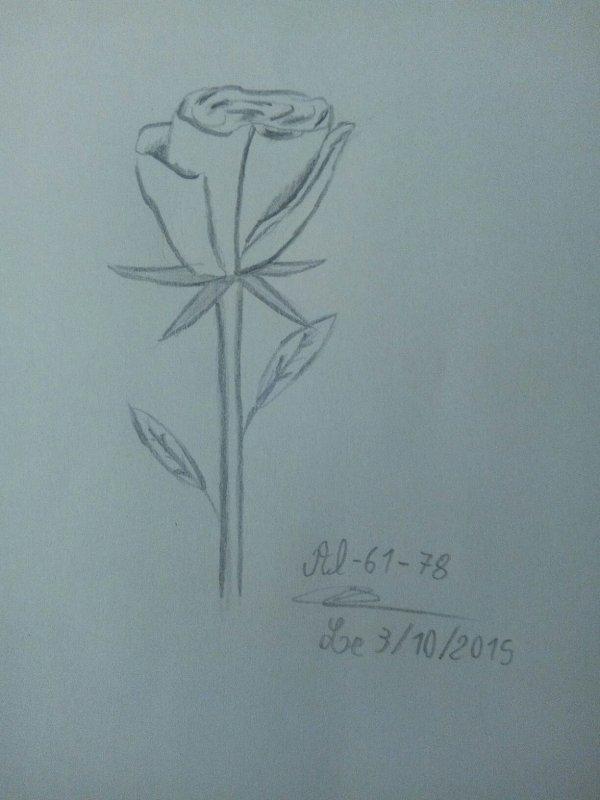 Dessin d'une rose réalisé pour un petit concours