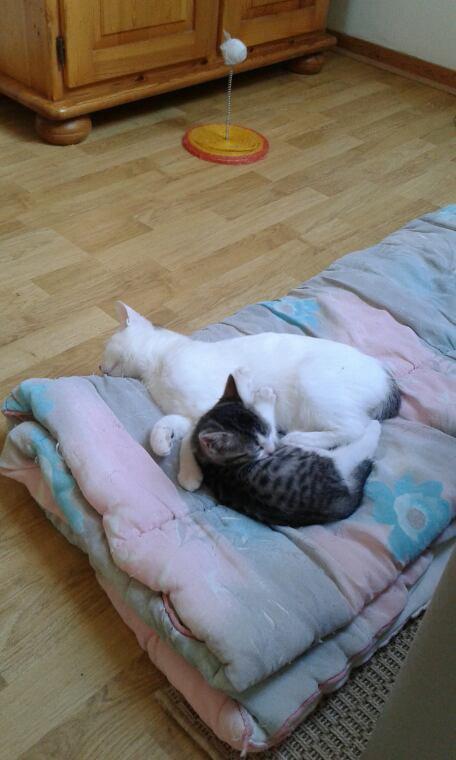 les chat  que j aine