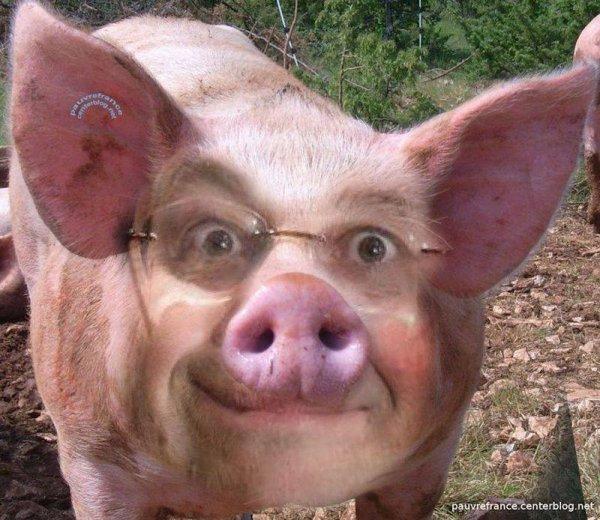 Un selfie de François le Goret sosie de qui vous savez !