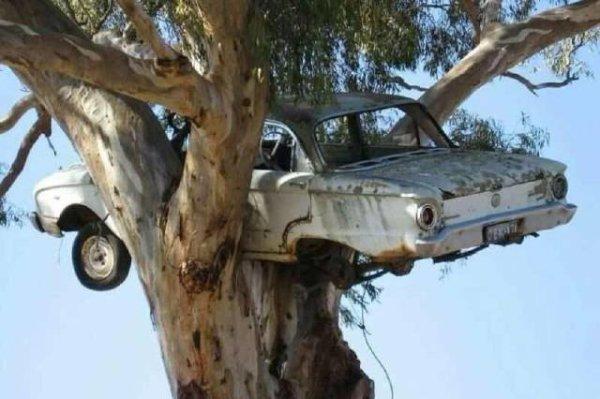 Chéri! J'ai garé la voiture!
