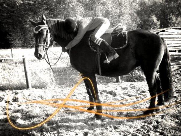 """"""" Il n'y a pas de secret aussi intime que celui entre un cavalier et son cheval ..."""""""
