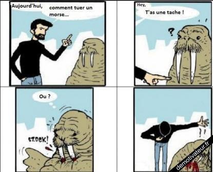 Comment tuer un morse ? =)