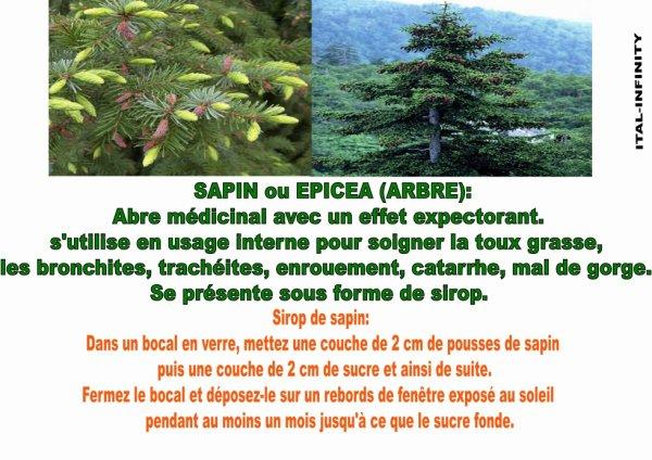 le Sapin et ses vertues