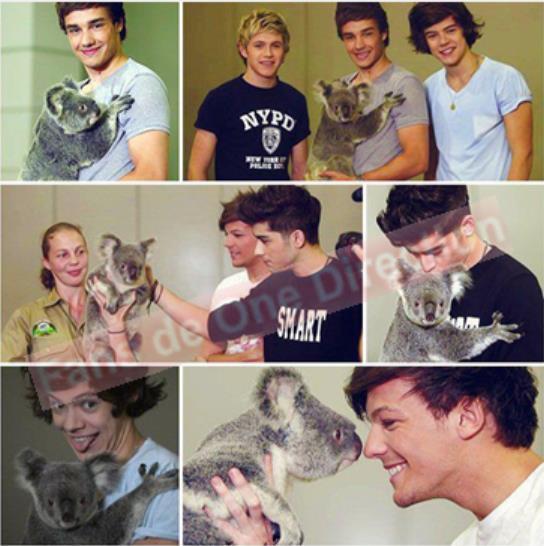 Les one direction avec des koalas si c'est pas choux !