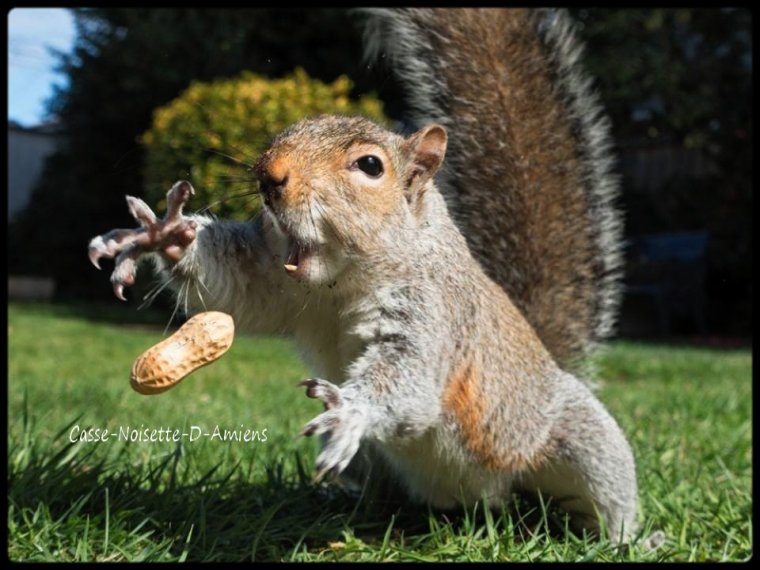 Mazette ma cacahuète qui se fait la malle !!! :D