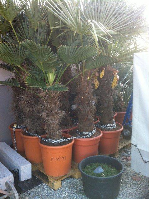 planteparadise