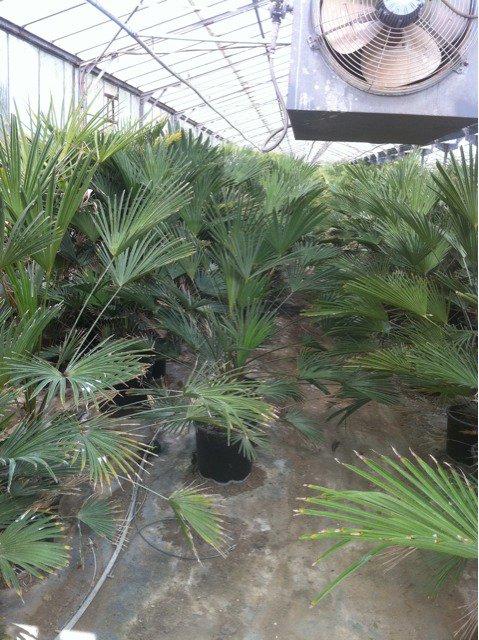 hyeres les palmiers