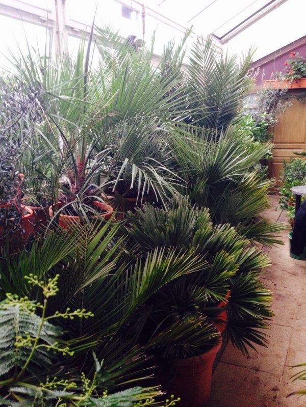 Les derniers palmiers rentré