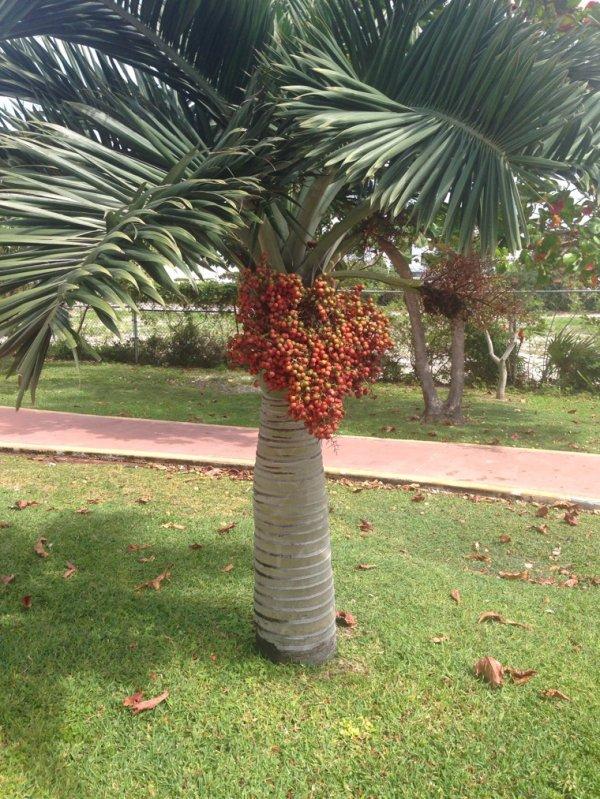 Cancun Mexique